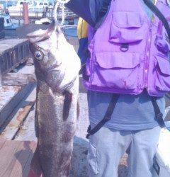 旧の白灯台、ウキ釣りで71cmのスズキGET!
