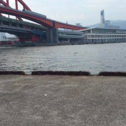 神戸港4,5,6,8防 タコジグでタコ3バイ サビキのアジは入れ食い