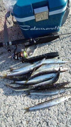 初島漁港 メタルジグでカマス14尾 ジグヘッド+ワームには反応無し