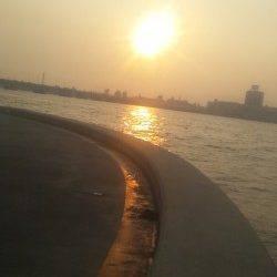 淀川河口でマハゼ・キビレの釣果