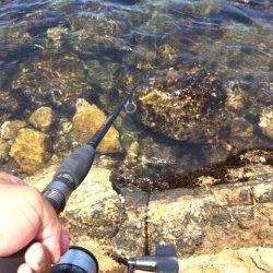 阿那賀での穴釣りの釣果