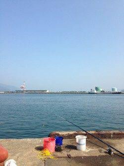 敦賀港 明け方のサビキで豆アジ&コノシロ