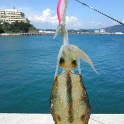 田ノ浦漁港、エギを2号に変更して釣れました