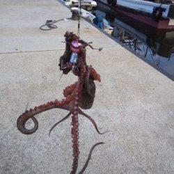 林崎漁港 日中のオクトパッシングでタコ1パイ