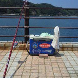 洲本 投げ釣りでキス〜22cm22匹 チャリコはリリース