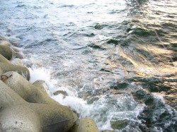 りんくうエリア、ジグサビキでカマス等の釣果