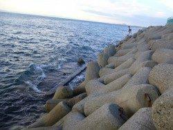 ジグサビキでのカマスの釣果 りんくうエリアで