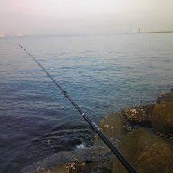 姫路でウキ釣り、明るくなった時間にベラがつれました
