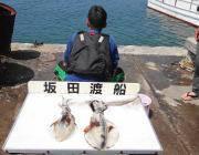 【3日】黒島の磯のアオリイカ