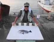 黒島の筏チヌ、オキアミで釣れました