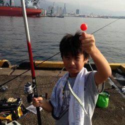 兵庫突堤、サビキでアジが大漁です♪