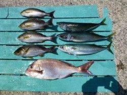 【ゴマサバ入れ食い】沖一文字でカゴ釣り