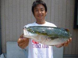 湯浅の磯、ダイビングペンシルで55cmのハマチHIT!