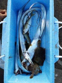 兵庫突堤で太刀魚釣り 快釣です♪