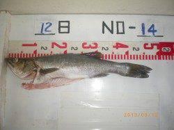 アジをエサにハネをゲット 姫路市立遊漁センター