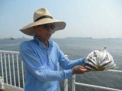 【まだまだ暑い一日です】南港海釣り公園でアジ・ガシラ