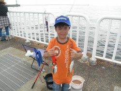 南港海釣り公園 サイキでアジ・イワシなど アイゴのヒレにはご注意を
