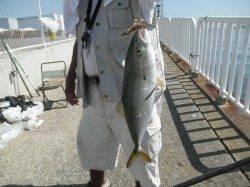 南港海釣り公園、魚種豊富に釣れいます♪