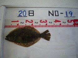 シラサエビで立派なスズキが釣れました♪姫路市立遊漁センター