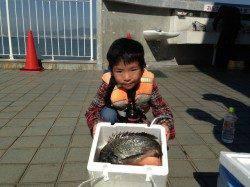 釣り少年がサビキで立派なチヌを釣り上げました!