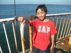 南港海釣り公園でサビキアジ!太刀魚を朝に釣れています