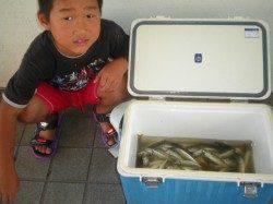 姫路市立遊漁センター サビキのアジが好調