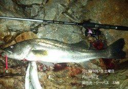 77cmのシーバスをキャッチ! in 円山川