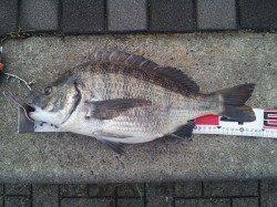 舞洲 朝のフカセ釣りでチヌ〜49.5cmの好釣果☆