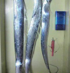 岸和田一文字 ワインドでタチウオ〜85cmの釣果出てます☆