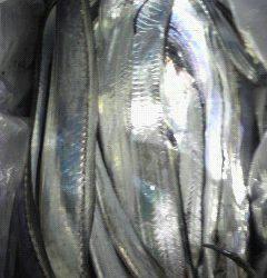 岸和田一文字 ルアーでタチウオ80cm前後の釣果