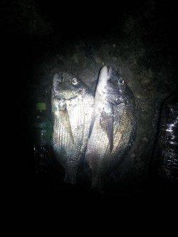 千里浜手前のワンドでフカセ釣り、ヘダイ・チヌ