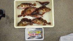 堺漁港にて16時頃から良型のガシラがヒット