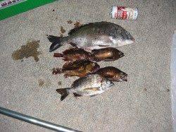鰯浜漁港 19時〜23時のウキ釣りでチヌ・メバル・ガシラ
