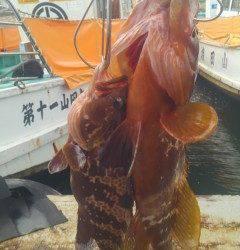 ズボ釣りで高級魚アコウGET!旧の赤灯台