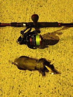 マッチザベイトで狙い通りアオリをキャッチ!淡輪漁港