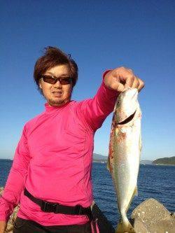 加太漁港ルアーでツバス、エギングは好調!!