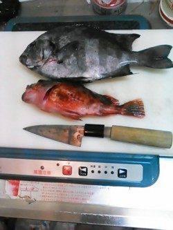 淡路島メガフロート海釣り公園、最大24cmのカワハギなどの釣果