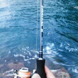 中層でガツンと! 柴山港でアオリイカ胴長22cm750g♪