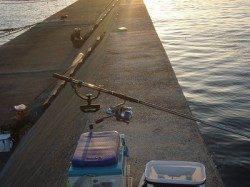 武庫川尻一文字、ルアーとのませ釣りでの釣果