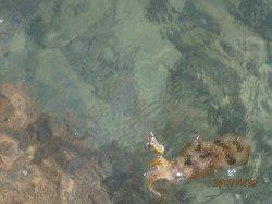 養老エギング釣果 一時間でアオリ大漁GET!