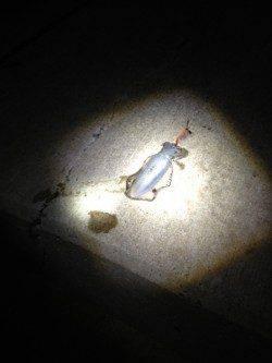 深日漁港でのナイトエギング調査 銀テープのエギに好反応