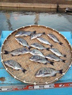 マリーナシティ海釣り公園、紀州釣りでチヌ13匹!