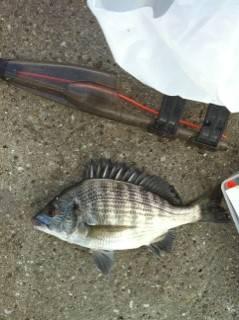 武庫川河口のダンゴ釣りでチヌ・グレ
