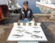 黒島の磯 グレと良型アイゴの釣果