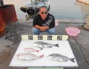 良型チヌ&マダイの釣果 黒島の筏