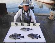 黒島の磯 ウニをエサにイシダイ3尾