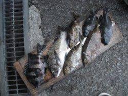 ジロー磯でフカセ釣り、色々な魚が釣れました♪