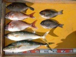 【潮早めです】のこぎりでカゴ釣り ヒラマサ&マダイ