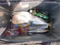 黒島・タイカケ、カゴ釣りで小マサの釣果