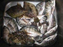 今日の宮崎沖カセは魚種豊富に釣れました